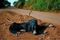 Hoje eu encontrei o seu cão! A mais forte mensagem contra o abandono de animais