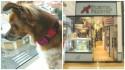 Cachorrinha não é atendida em pet shop de São Paulo por ser vira-lata