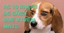 As 10 raças de cães que vivem mais