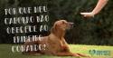 Por que meu cachorro não obedece ao primeiro comando?