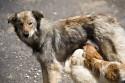 Plano nacional de esterilização de cães e gatos é aprovado pela Câmara