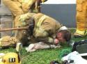 Bombeiros fazem de tudo para reanimar cão que sofreu parada respiratória após incêndio – Verdadeiros Heróis