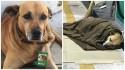 """Cachorrinho """"Nacional"""", mascote e funcionário do mês de posto de combustíveis é ferido com tesourada por morador de rua"""
