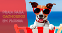 Atenção cães praieiros: Floripa pode ser a 1ª cidade nacional com praia para cachorros