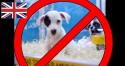 Revenda de filhotes pode ser proibido na Grã-Bretanha