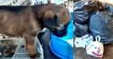 Filhotinho de cachorro jogado em lixo é adotado em Novo Horizonte (SP)