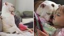 Cães buldogues ajudam meninas a se recuperarem da perda de pai