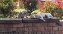 Macaco admira e acaricia cachorro dormindo em parque