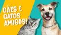 Como fazer cães e gatos viverem em harmonia?