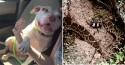 Cão herói salva sua mãe de cascavel e leva mordida