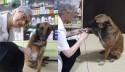 Cão de rua com pata ferida pede ajuda em farmácia e recebe o melhor atendimento