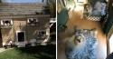Mulher constrói casa luxuosa para seus cachorros - confira fotos