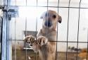 Espanha implementará multa pesada para quem maltratar ou abandonar animais