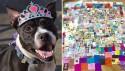 Cachorra idosa devolvida a abrigo ganha festa de aniversário com presentes do mundo todo