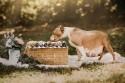 Pit Bull grávida brilha em ensaio fotográfico só seu - veja fotos
