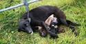 Morador salva cadela e seus 'bebezinhos' abandonados, famintos e com muito frio