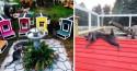 Vila felina: Protetores de pets criam abrigo especial para gatos velhinhos e com deficiência