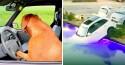 Cachorro esquecido dentro de carro 'dirige' o veículo e o joga dentro de piscina