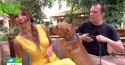 Patrícia Poeta se recusa a tocar em cão pit bull em programa e recebe duras críticas do público
