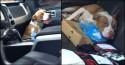 Pit bull abandonado que invadiu caminhonete de casal é adotado: 'Surpresa de fim de ano'