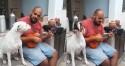 Cãozinho boxer talentoso canta em ritmo de samba ao lado de amigo e vídeo viraliza