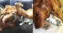 Cachorrinha afastada precocemente de seus filhotes volta a ser feliz após acolher gatinho fofinho