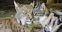 Foto: Life With Cats / Reprodução