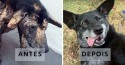 Cão que vivia em lixão e comia restos de comida é adotado nos EUA: 'Hora de ser feliz'