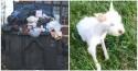 Cachorrinha abandonada desnutrida em lixo é adotada por família amorosa: sofrimento nunca mais