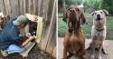 Vizinhos facilitam amizade entre cães criando uma janelinha para eles conversarem