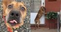 Cachorro que não sabia que foi abandonado espera ainda a chegada de dono