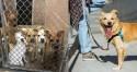ONG lança iniciativa para estimular pessoas a passearem com cães abandonados em abrigos