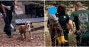 Pitbull encontra menino de 3 anos perdido na floresta e o protege até chegada de socorristas