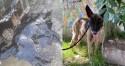 Cachorros notam cadela petrificada de alcatrão e buscam ajuda para salvá-la