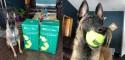 Cão fica em êxtase ao ganhar 400 bolas de tênis de aniversário e doa parte para cães de abrigo