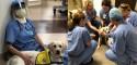 'Cãoterapeuta' conforta profissionais da saúde em hospital no combate ao coronavírus