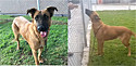 Família abandona cadela em abrigo após seu tutor falecer.