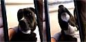 Cachorro e tutora se comunicam por vídeo chamada.