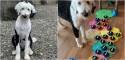 Cão da raça Sheepdoodle conversa com tutora usando mesa de som com 45 palavras - confira o vídeo