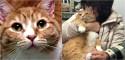 Gato abandonado por ser 'amoroso demais' encontra família tão grudenta quanto ele