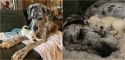 Foto: Facebook / Dogwood Animal Rescue Project
