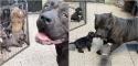 Foto: Reprodução Youtube / Giant Bully Pitbulls Rasit Kaplan