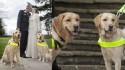 Casal Claire Johnson e Mark Gaffey, junto dos seus cães Venice e Rodd. (Foto: The Guide Dogs For the Blind Association)