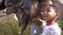 Pit bull e criança perdida são encontrados andando sozinhos em rua americana. FOTO: FOX 2 ST. LOUIS
