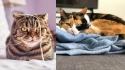 Gatos deixam qualquer ambiente feliz. (Foto: Reprodução/Juan Gomez | Instagram/speedy.cat1)