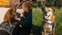 Moly aguarda a 11 anos por uma adoção. (Imagem: Dogs Trust)