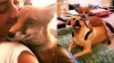 Raposa é adotada e faz amizade com a cadela da família. (Foto: Instagram/vixeythevixenxx)