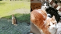 Gato Stavro, faz amizade com gatinho perdido e dona adota-o. (Foto:Instagram/@ la_riek)