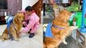Dono pede para seu cachorro ir ao mercado fazer as compras. (Foto: Reprodução/TikTok)