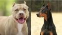 No México, lei que proíbe cirurgias estéticas em orelhas ou rabo dos animais é aprovada. (Foto: Reprodução / Pinterest)